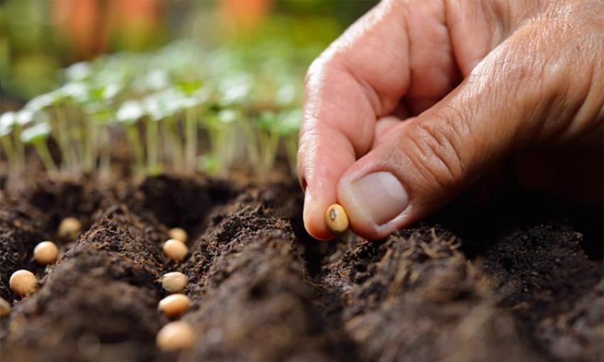Cultivemos con esperanza