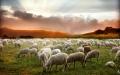 Andaban como ovejas sin pastor