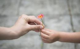 La gratitud alimenta el alma